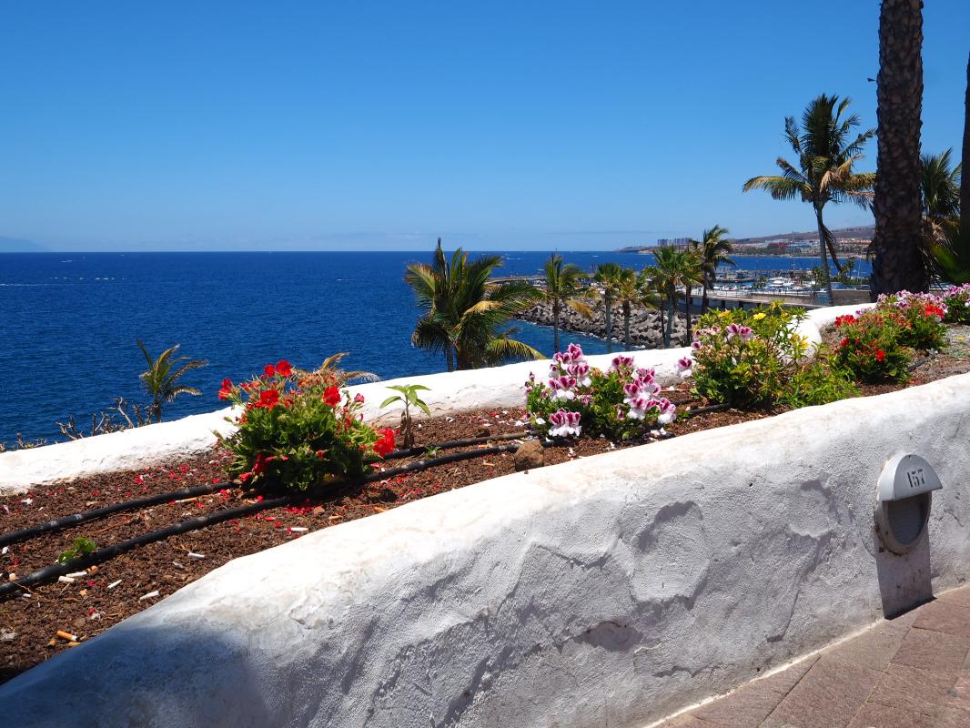 Dove andare in spiaggia a Tenerife: El Médano
